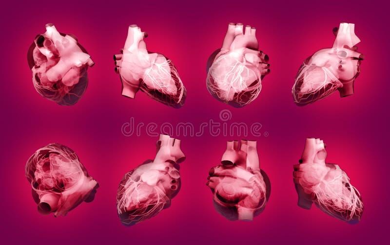 serce cz?owieka r?ce anatomii orygina? ilustracyjny malowaniu Set wielosk?adnikowi widoki zdjęcie stock