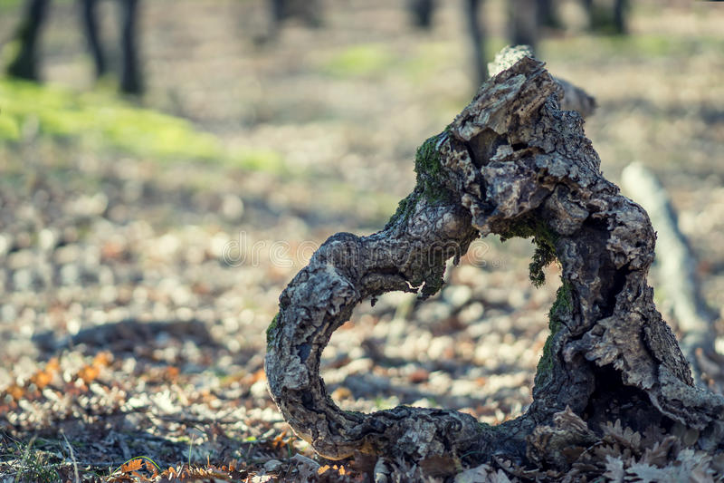 Serce drewno w naturze obrazy stock