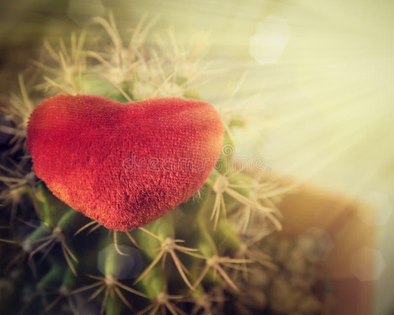 Serce i kaktus w słońcu obrazy royalty free