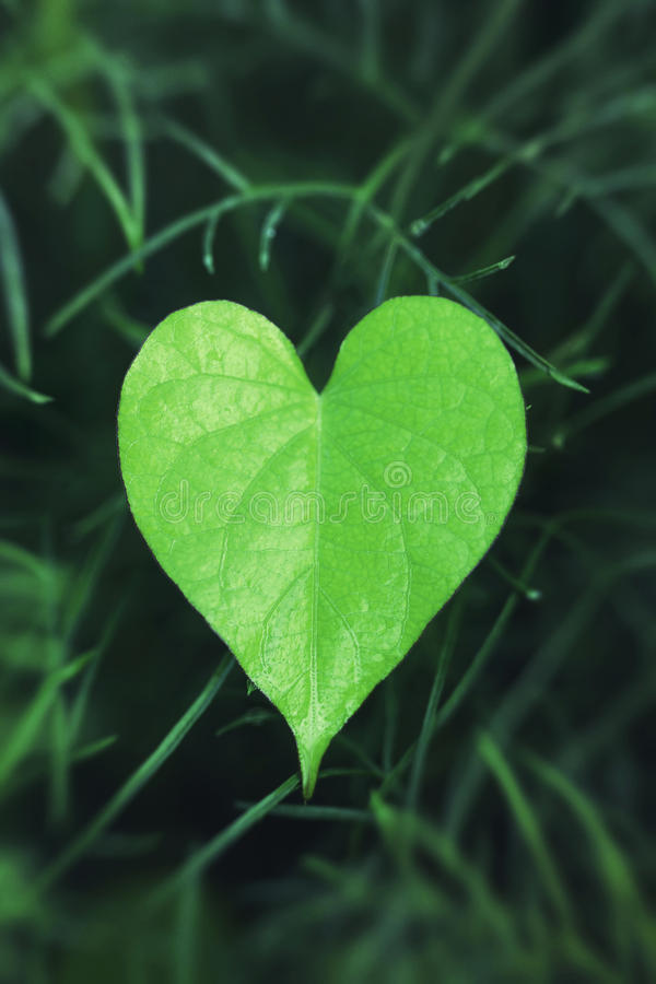 serce liść kształtowali zdjęcia stock