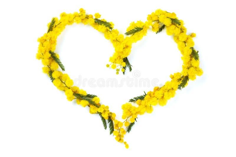 Serce mimoza zdjęcia royalty free