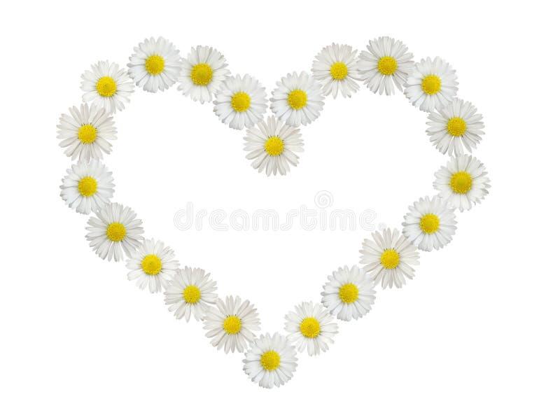 serce odizolowane daisy zdjęcie stock
