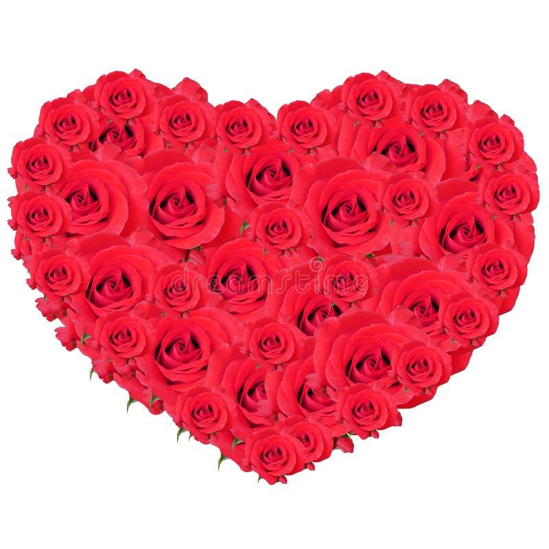 Serce róże, róża odizolowywająca na biel, obrazy royalty free