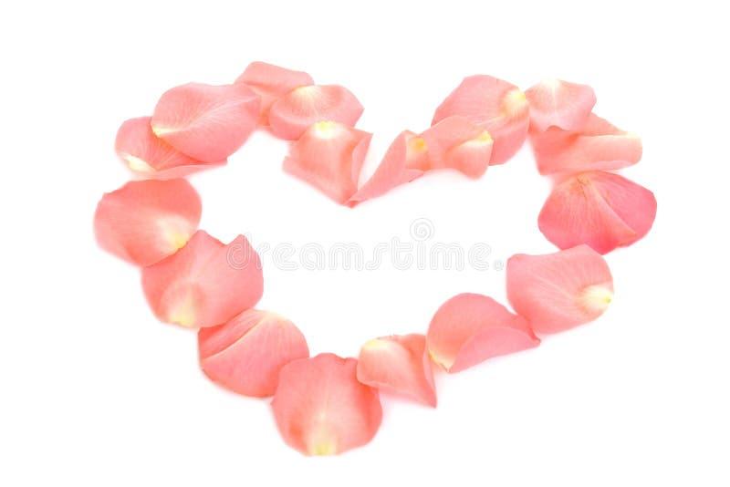 serce różową różę zdjęcie royalty free