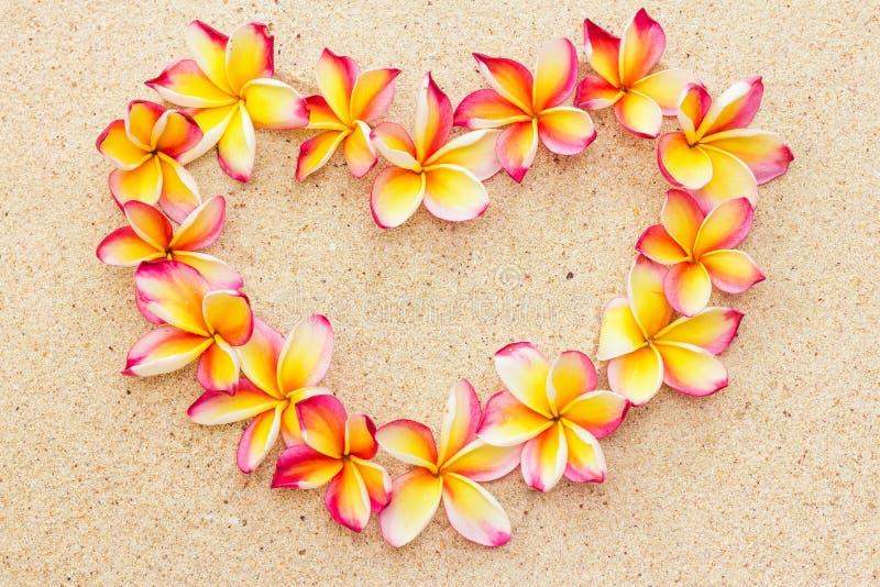 Serce robić frangipani lub plumeria kwiaty na piasku, odgórny widok fotografia royalty free