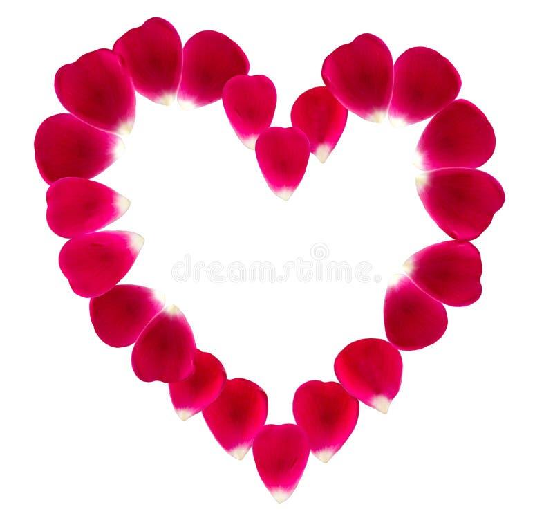 Serce robić piękni różani płatki obraz royalty free