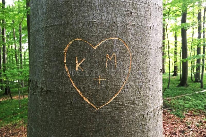Serce rzeźbiący w drzewie obraz royalty free