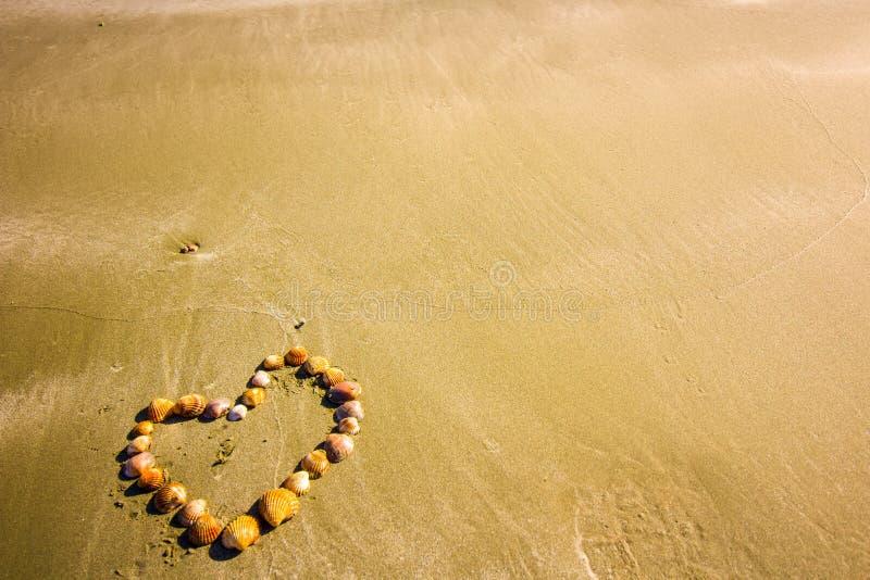 Serce Shell, kształt łuska na złotych piaskach Cypr, tło, abstrakcjonistyczna wakacyjna fotografia dla,/miłości i lata obrazy royalty free