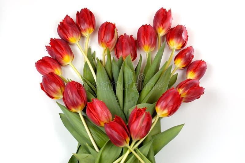 serce się tulipany symboli fotografia royalty free