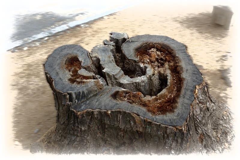 Serce starego drzewa zdjęcia royalty free