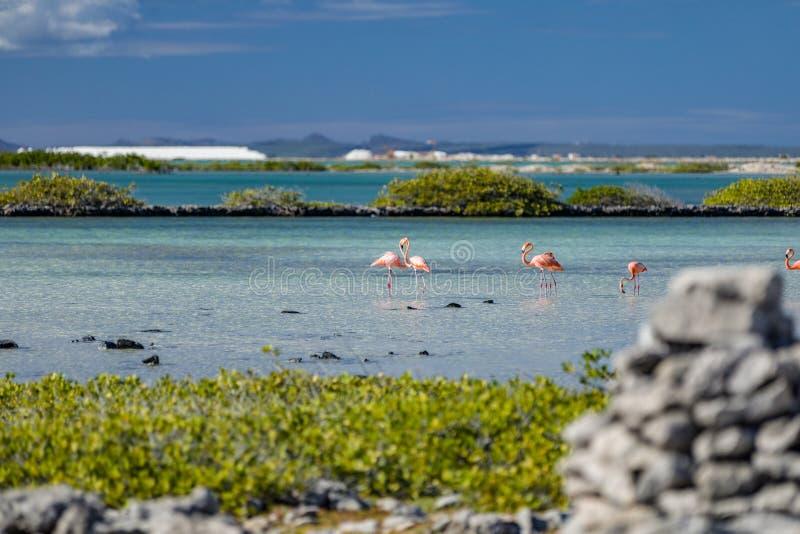 Serce tworzył dwa flamingami w solankowych mieszkaniach w Bonaire holandiach Antilles fotografia royalty free