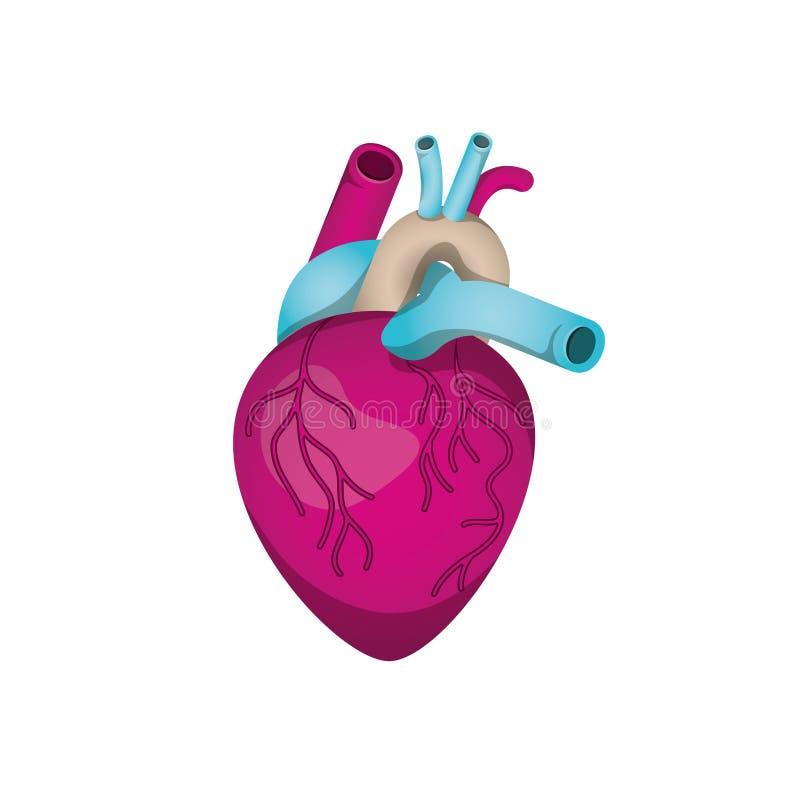 Serce z żyły odosobnioną ikoną ilustracji