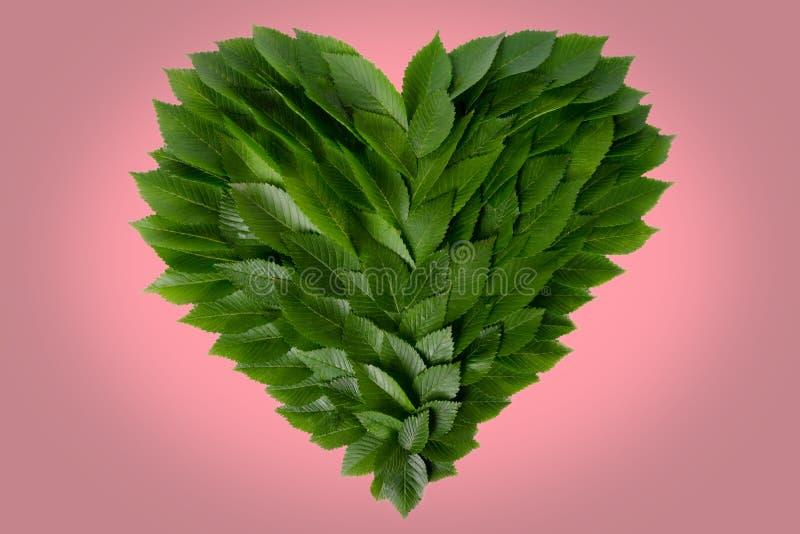 Serce zieleni liście Pojęcie miłość natura i gacenie zdjęcia stock