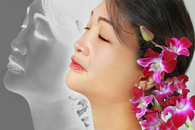 Serene beauty with orchids royalty free stock image