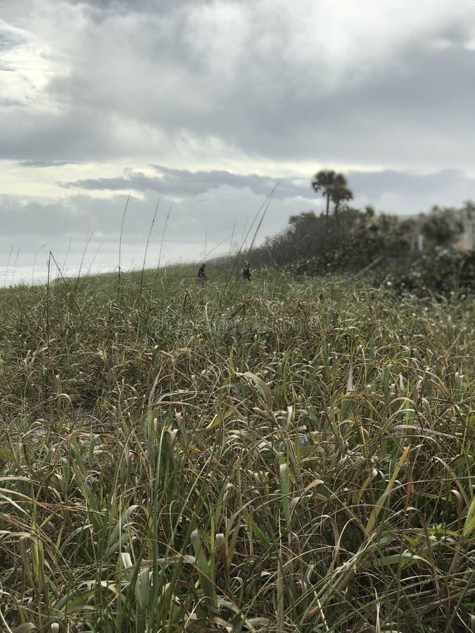 Serene Green Beauty de la costa nacional U de Canaveral S National Park Service fotografía de archivo libre de regalías