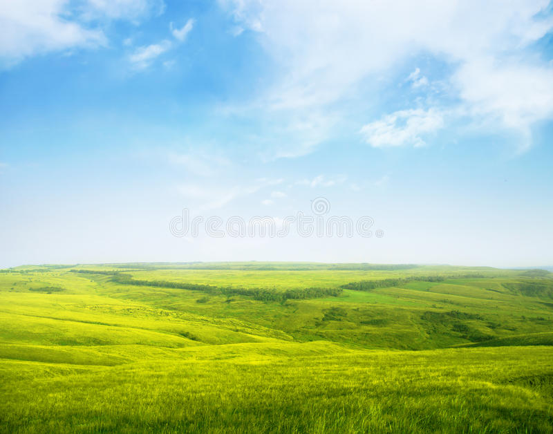 Serene hilly meadow royalty free stock photo