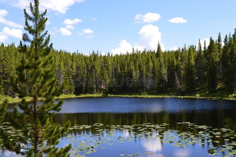 Serene Lake escondido na floresta nacional do Bighorn imagens de stock