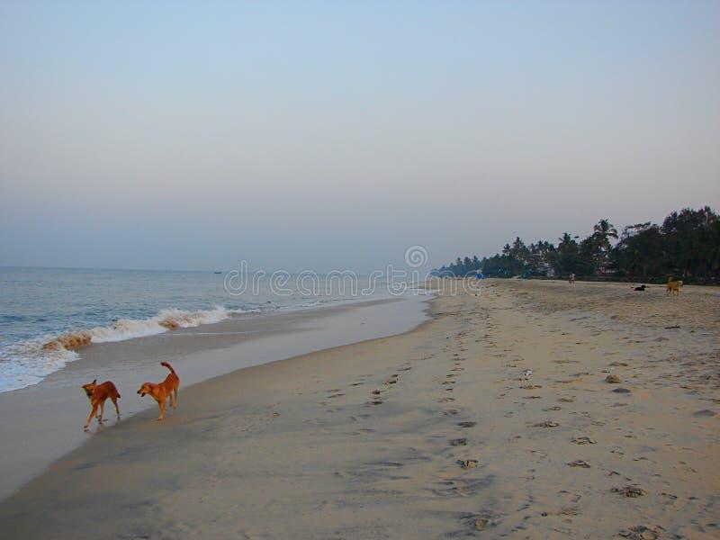 Serene Lonely Beach con i cani di scortecciamento nel primo mattino immagini stock