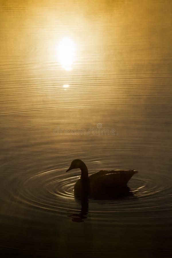 Serene Misty Morning calma ad alba sopra acqua increspata immagini stock libere da diritti