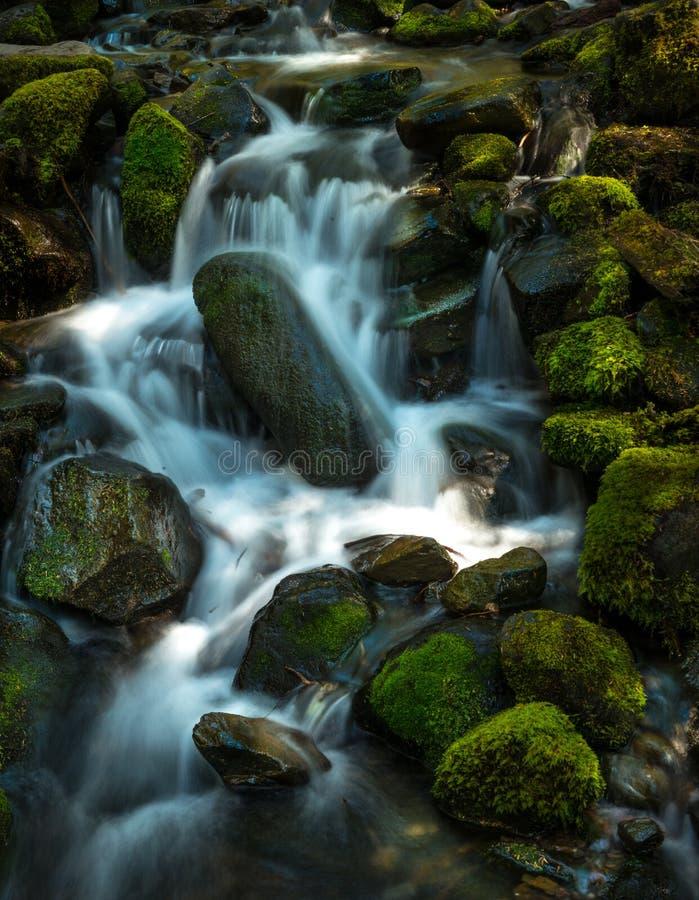 Serene Mossy Waterfall fotografering för bildbyråer