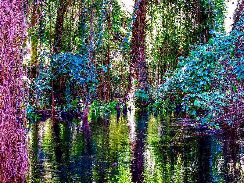 A serene nook in the Loxahatchee National Scenic River in the NE Florida Everglades royalty free stock photos