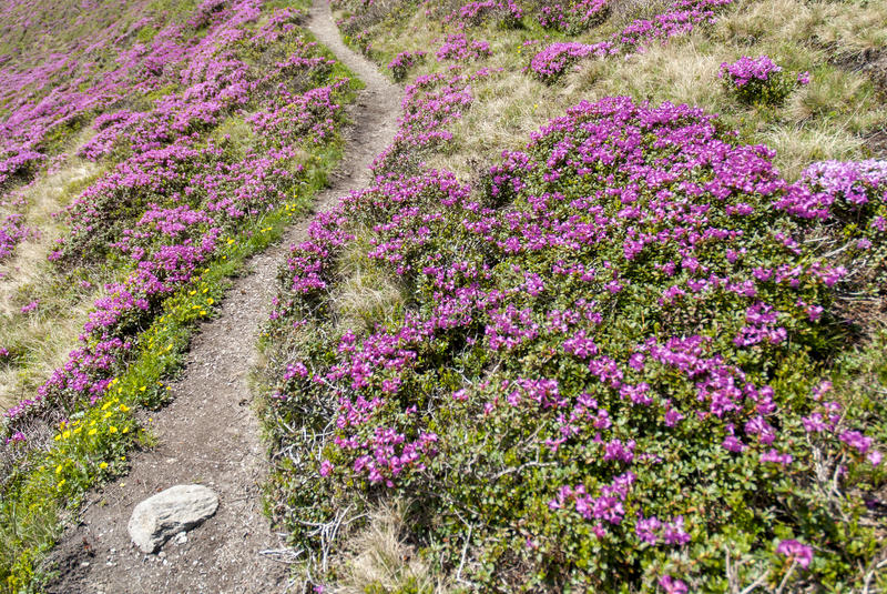 Serene path among pink flowers stock photos