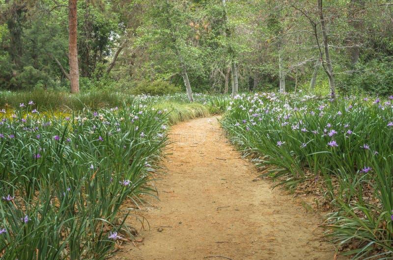 Serene Pathway photos stock