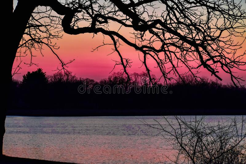 Serene Pink Sunset with Silhouetted Trees royalty free stock photo