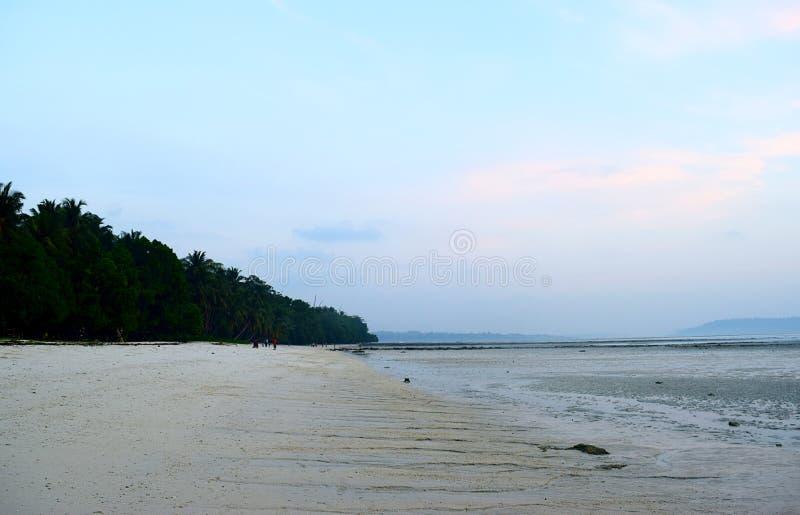 Serene Relaxing Sandy Beach Landscape med frodiga gröna palmträd med himmel på gryning - Vijaynagar strand, Havelock, Andaman öar royaltyfria bilder