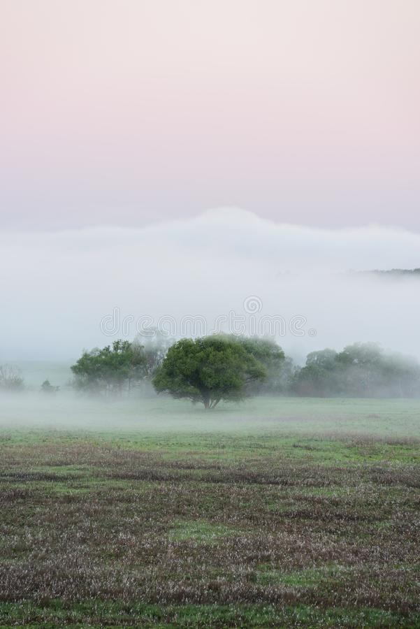 Serene scene of big green trees in distant fog at summer dawn copy space stock images