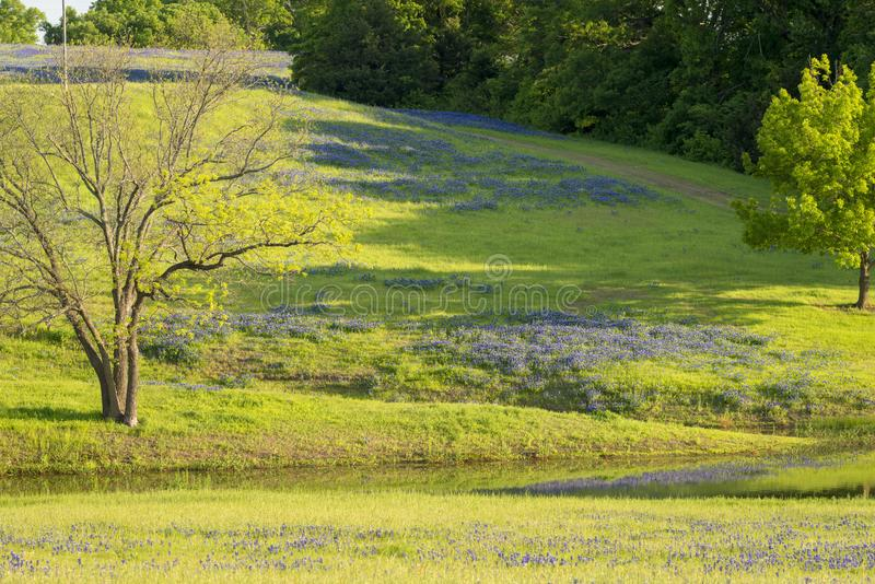 Rural texas spring flowers reflecting on a pond stock image image download rural texas spring flowers reflecting on a pond stock image image of spring mightylinksfo