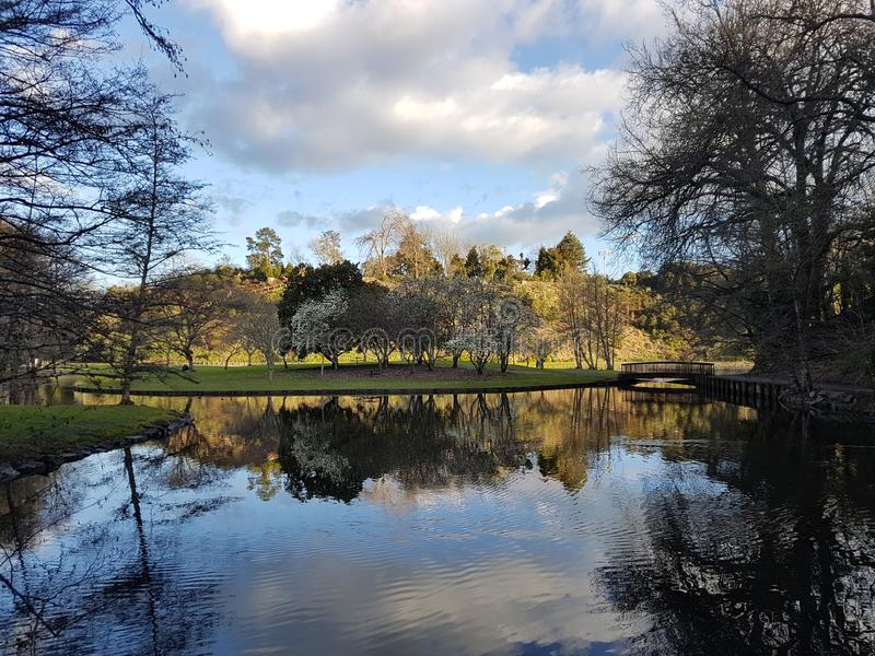 Serene view of lake and trees. Serene view of local garden in New Zealand stock photography