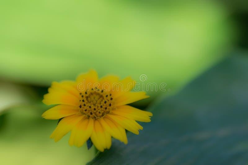 Serene Yellow Flower arkivfoto