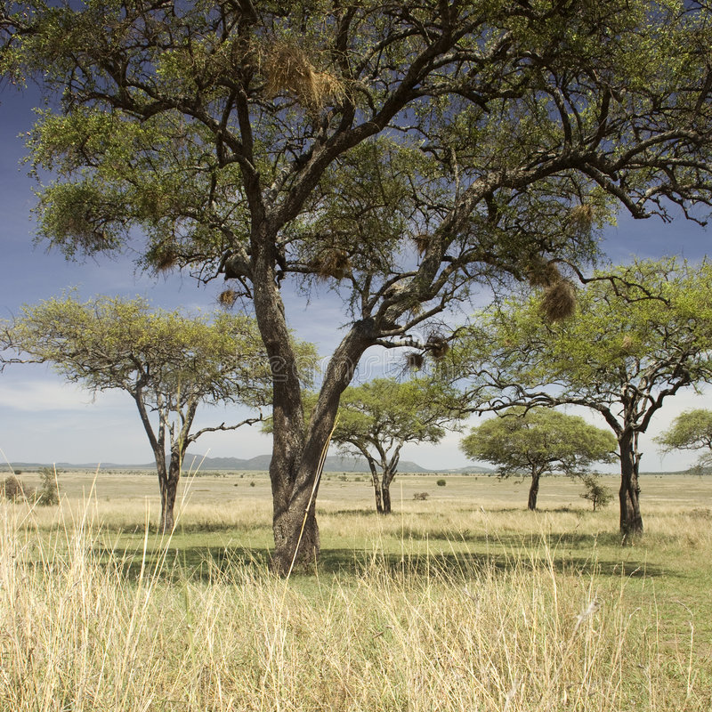 serengeti τοπίων στοκ εικόνα με δικαίωμα ελεύθερης χρήσης