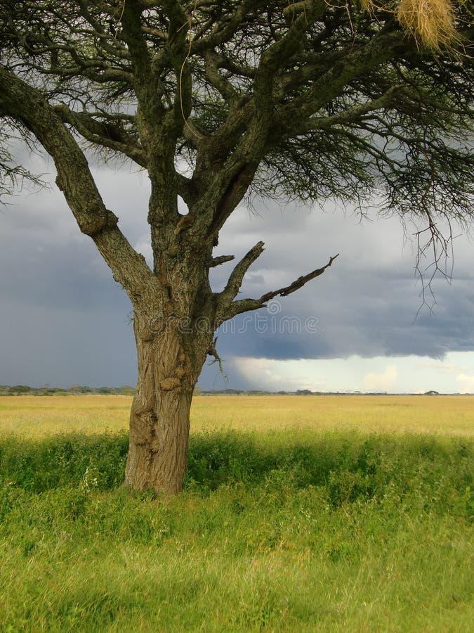 Serengeti Танзания стоковое изображение rf