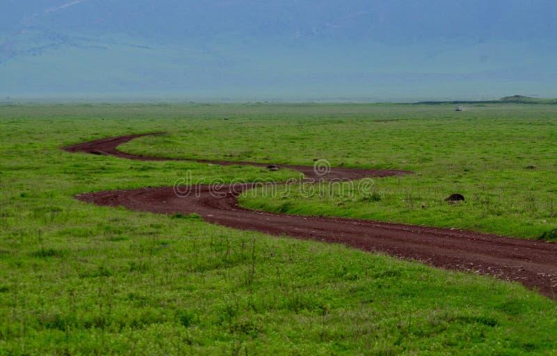 serengeti imagen de archivo