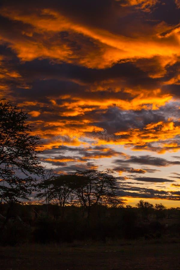 Serengeti - alvorecer do acampamento do safari imagens de stock
