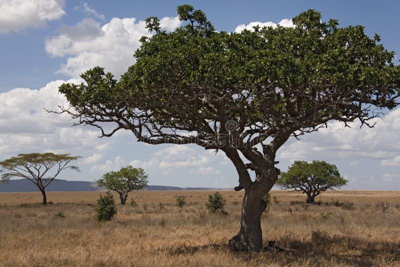 Serengeti de l'horizontal 028 de l'Afrique photographie stock