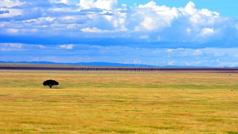 Serengeti Landschaft stockfoto