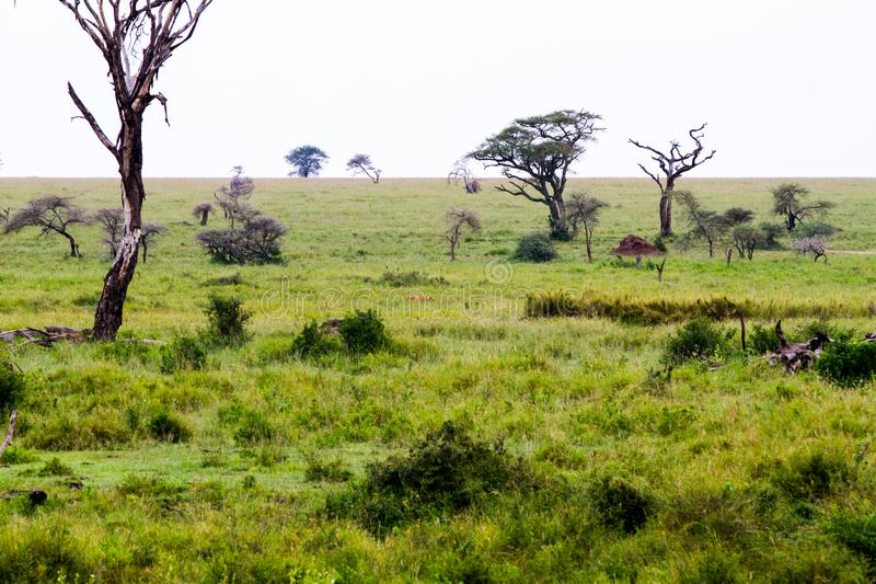 Serengeti National Park Landscape, Tanzania royalty free stock photo