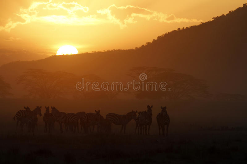 Serengeti Sunset II stock photo