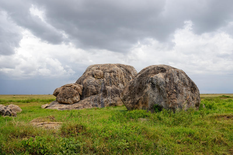 serengeti tanzania arkivfoto