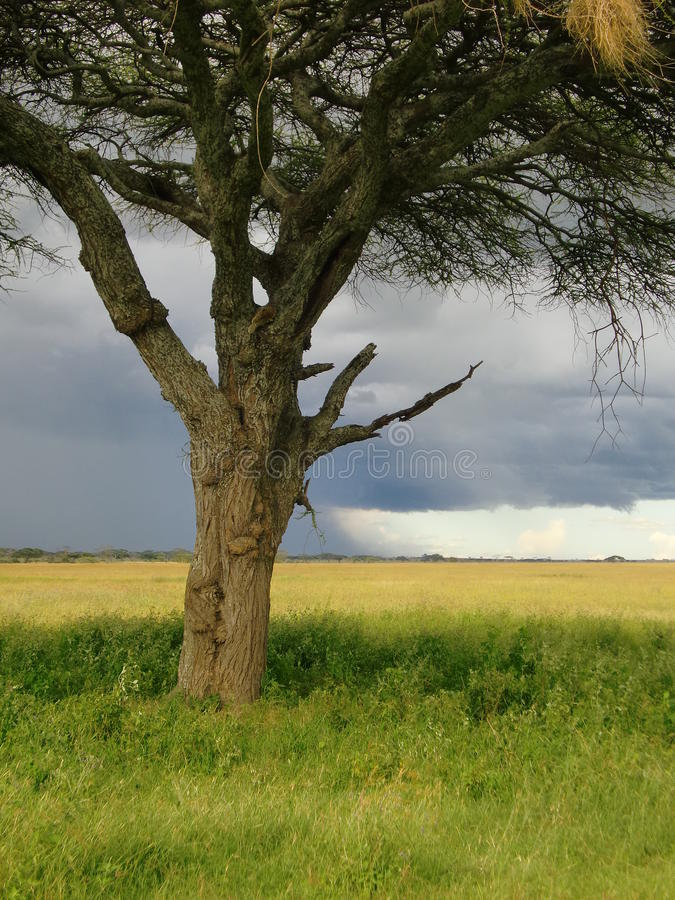 Serengeti Tanzania royalty-vrije stock afbeelding