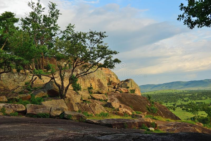 Serengeti, Tanzania, Afrika stockfotografie