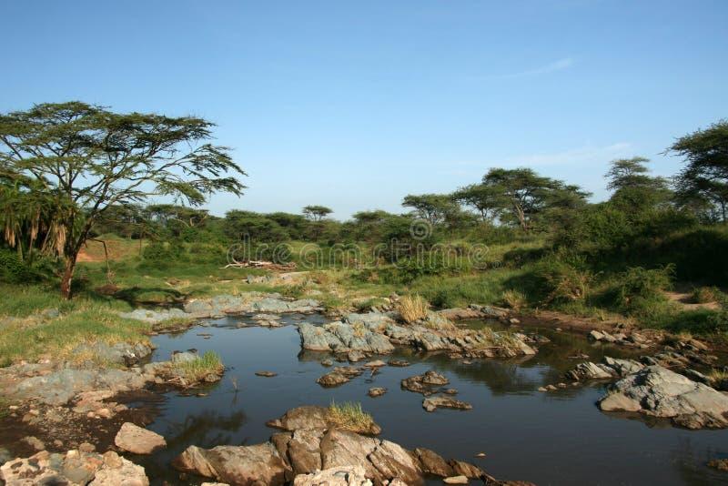serengeti tanzania för africa flodsafari arkivfoto