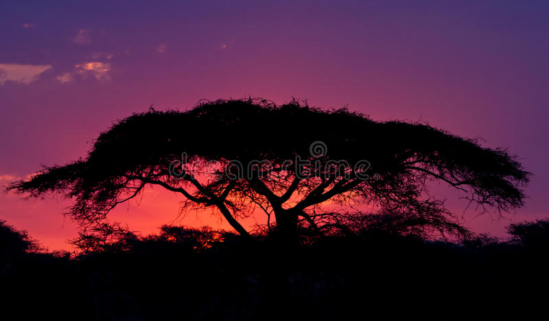 serengeti zmierzch zdjęcie stock