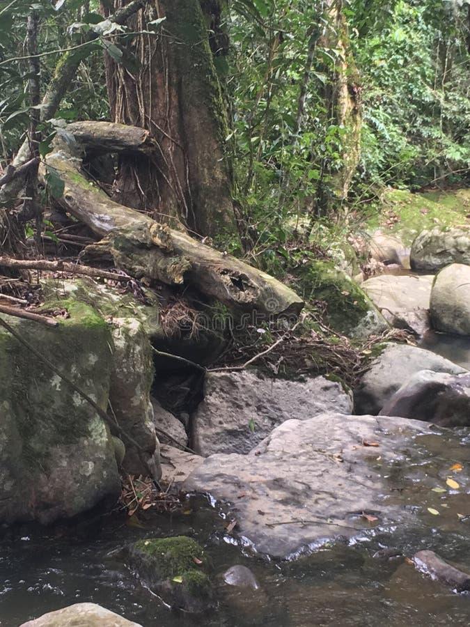Serenidad de la cala de la selva foto de archivo