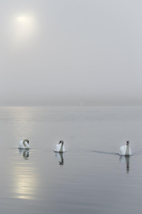 Serenità fotografie stock