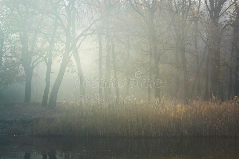 Serenity of morning. Autumn morning sun rays filtering through the mist among the trees stock images