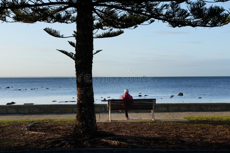 A woman wearing a head scarf sitting alone on the bench in front of the sea under a pine tree. royalty free stock image